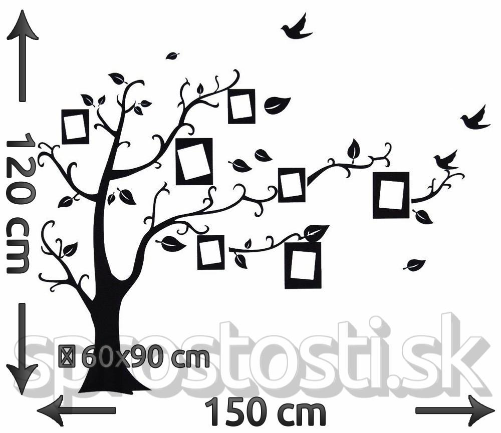 Strom rodokmeň